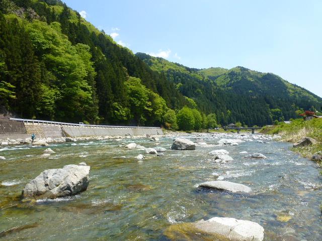 馬瀬川の成魚放流日