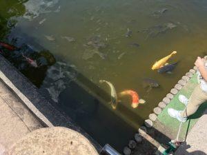 鯉のエサやり場