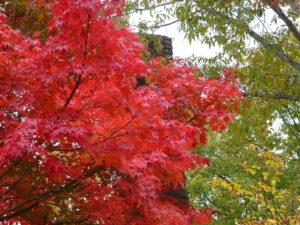 博石館内の紅葉
