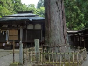 日枝神社の拝殿と大スギ